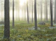 Tallskog, Fagermon, Vingåker