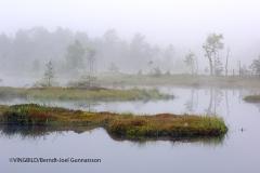 Skogstjärn i dimma
