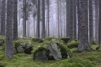 Mossa i granskog, Båsenberga, Vingåker