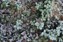 D74513-10 Rimfrost på marken