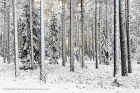 Vinterskog II