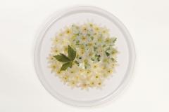"""Bricka """"Vitsippor"""" / """"Wood anemones""""Diameter 38 cm (rund)Pris: 300 kr"""